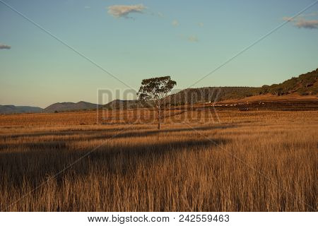Country Agricultural And Farming Field.