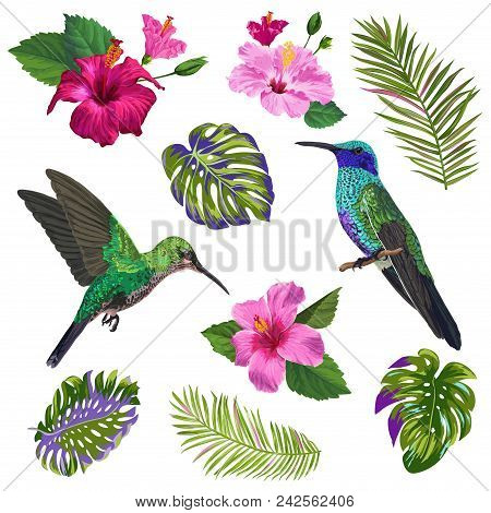 Watercolor Hummingbird, Hibiskus Flowers And Tropical Palm Leaves. Hand Drawn Exotic Colibri Birds A