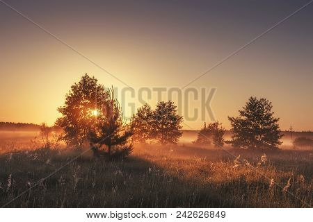 Early Sunny Misty Morning On Golden Meadow With Trees On Sunrise. Perfect Landscape Of Summer Nature