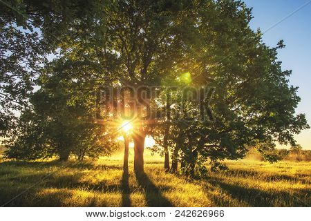 Summer Nature In Morning Sunlight On Meadow With Large Tree. Sunbeams Through Branches Of Tree. Gras