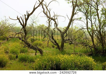 Windswept Desolate Landscape With Grasslands And Wildflowers Taken At A Plain On Mauna Kea Mountain,