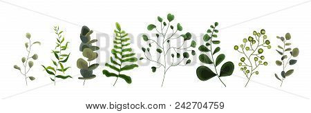 Collection Of Greenery Leaf Plant Forest Herbs Tropical Eucalyptus Leaves Spring Flora In Watercolor