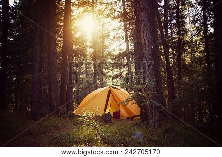 View Of Tent On Meadow In Forest At Sunrise. Camping Background. Tourist Tent In Forest With Sunbeam