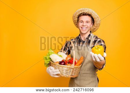 Gmo-free Sell Seller Marketer Agronomist Salad Onion Carrot Cabbage Promo Promotion People Person C-
