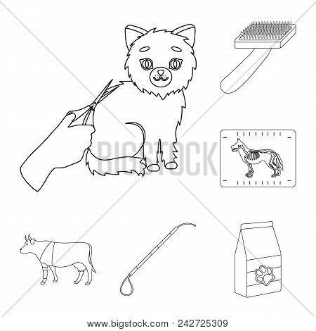 Veterinary Clinic Outline Icons In Set Collection For Design. Treatment Of A Pet Vector Symbol Stock