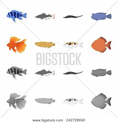 Discus, Gold, Carp, Koi, Scleropages, Fotmosus.fish Set Collection Icons In Cartoon, Monochrome Styl