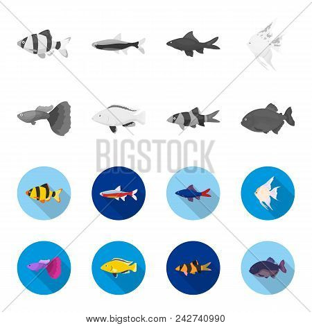 Botia, Clown, Piranha, Cichlid, Hummingbird, Guppy, Fish Set Collection Icons In Monochrome, Flat St