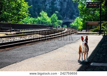A Dog Standing Outside At A Train Station In West Virginia.