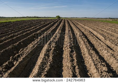 Plowed Agricultural Field. Landscape With Agricultural Land, Recently Plowed And Prepared For The Cr