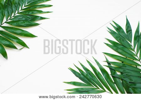 Palm Green Leaves Tropical Exotic Tree Isoalted On White Background. Holliday Patern