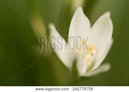 A Close-up Photo Of White Flowers In A Garden.  Swartz Creek, Mi, Usa.