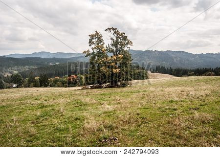 Autumn Moravskoslezske Beskydy Mountains With Meadow, Isolated Tree, Forest And Hills Near Vysni Moh