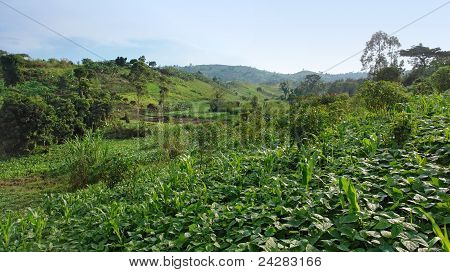 Near Rwenzori Mountains