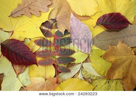 Leaves Pile
