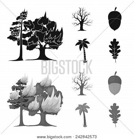 Burning Tree, Palm, Acorn, Dry Tree.forest Set Collection Icons In Black, Monochrome Style Vector Sy