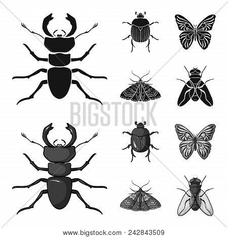 Wrecker, Parasite, Nature, Butterfly .insects Set Collection Icons In Black, Monochrom Style Vector