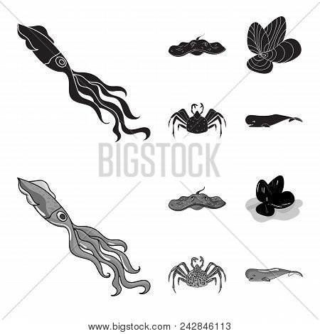 Electric Ramp, Mussels, Crab, Sperm Whale.sea Animals Set Collection Icons In Black, Monochrom Style