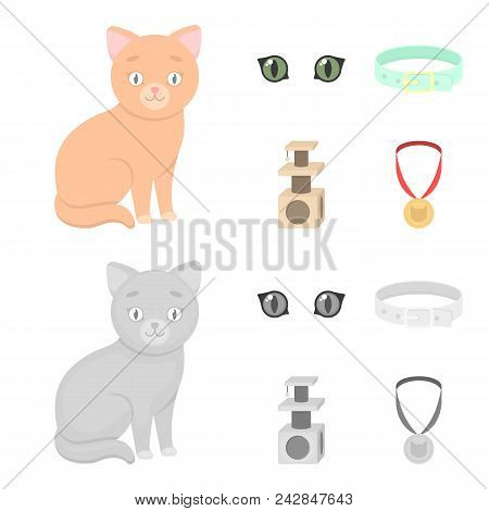 Cat Eyes, A Collar, A House For A Cat, A Medal On A Ribbon.cat Set Collection Icons In Cartoon, Mono
