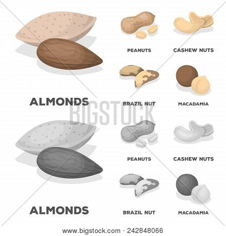 Peanuts, Cashews, Brazil Nuts, Macadamia.different Kinds Of Nuts Set Collection Icons In Cartoon, Mo