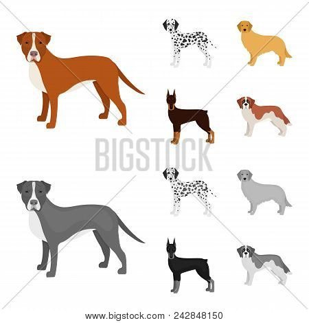 Dog Breeds Cartoon, Monochrome Icons In Set Collection For Design.dog Pet Vector Symbol Stock  Illus