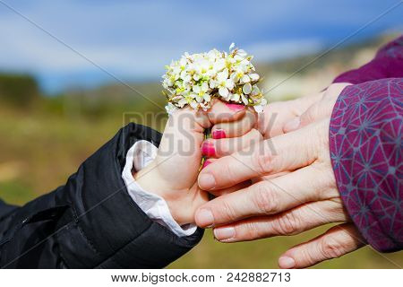 Child Giving Flowers To Her Mother. Cole Up View