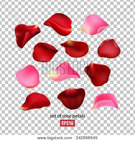 Set Of Rose Petals On A Transparent Background, Pink And Red Petals, Flower Petals. Vector