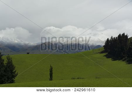 Mountains, Trees And Grasslands In New Zealand