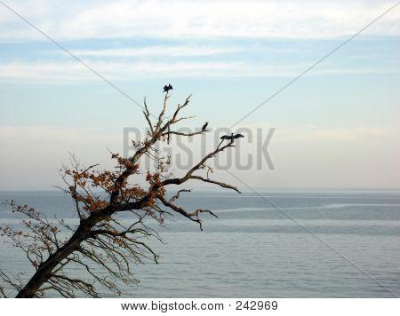 cormorants in a tree poster
