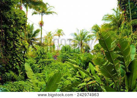 Lush Green Plants And Trees With The Pacific Ocean Beyond Taken At A Tropical Rain Forest Near Hilo,