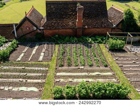 Garden Allotments Growing Vegetables By Castle Walls In Shrewsbury, England