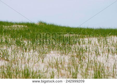 Tilt Shift Green Grass Beautifull Summer Background