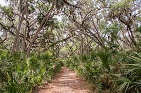 Early Spring On A Trail At Gemini Springs In Florida.