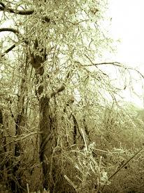 Frozentree