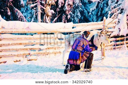 Man In Saami Traditional Garment At Reindeer In Finland Reflex