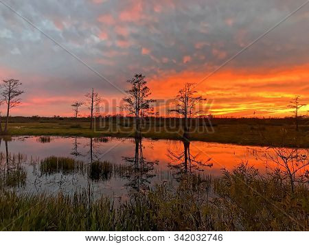 Silhouette Of Cypress Trees And Bayou During Sunset In The Swamp