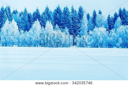 Snowy Trees In Countryside At Winter Rovaniemi Reflex