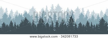 Coniferous Winter Forest Background. Nature, Landscape. Pine, Spruce, Christmas Tree. Fog Evergreen