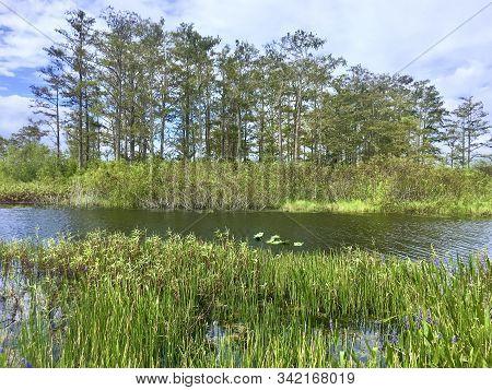 Summer Green In The Wetlands Of Louisiana
