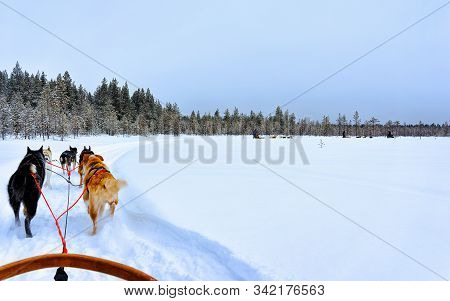 Husky Dogs Sledges On Frozen Winter Lake Lapland Northern Finland Reflex