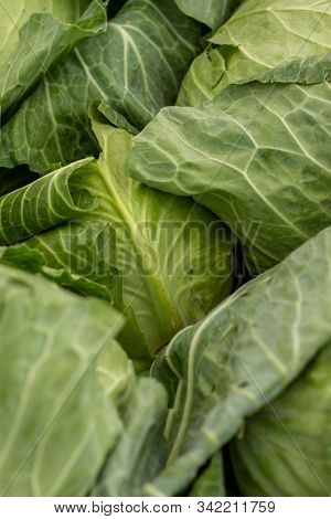 Close Up View of Fresh Green Lettuce