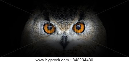 Owl Portrait On A Black Background. View From The Darkness