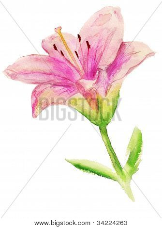 Pink Lily With Leaves
