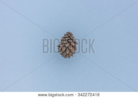 Pine Tree In The Snow. Nature Element Concept