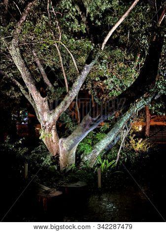 Linda árvore Ilumina Durante A Noite Escura