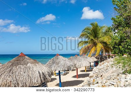 Trinidad, Cuba. Coconut On An Exotic Beach With Palm Tree Entering The Sea On The Background Of A Sa