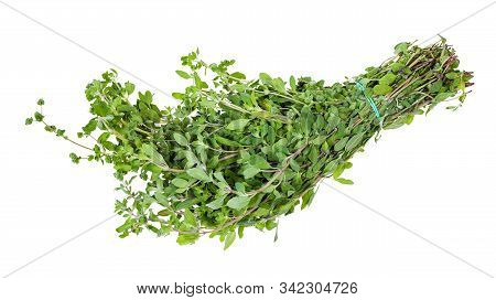 Bunch Of Fresh Marjoram (origanum Majorana) Twigs With Buds Isolated On White Background