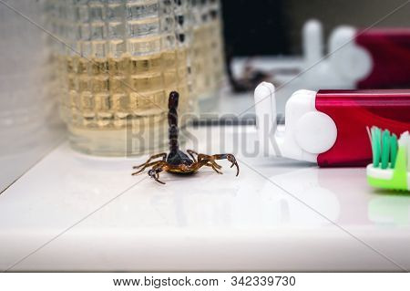 Scorpion Problem, Scorpion Plague Indoors. Poisonous Animal Inside The House, Need For Fingerings. S