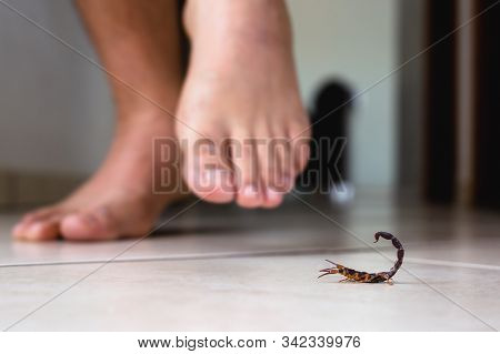 Scorpion Indoors Near A Person. Person Walking Near A Scorpion. Detection Concept, Brown Or Yellow S