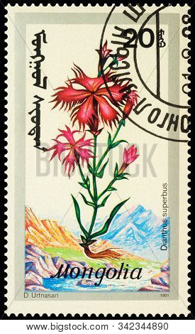 Moscow, Russia - December 29, 2019: Stamp Printed In Mongolia Shows Carnation (dianthus Superbus), S