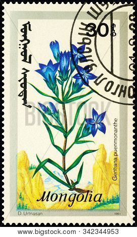Moscow, Russia - December 29, 2019: Stamp Printed In Mongolia Shows Flowers Gentiana Pneumonanthe, S